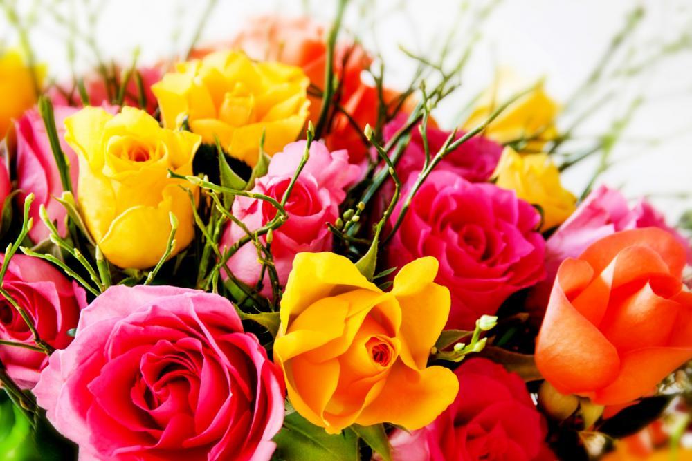 Fleurs.Pipou.thumb.jpg.9e7e0d877be3481e2d51ae0237fa2f74.jpg